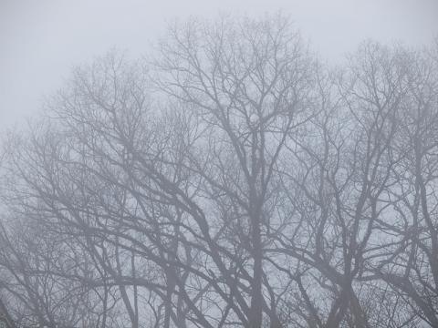 霧の広葉樹