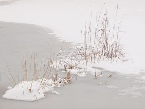 雪のトンボ池