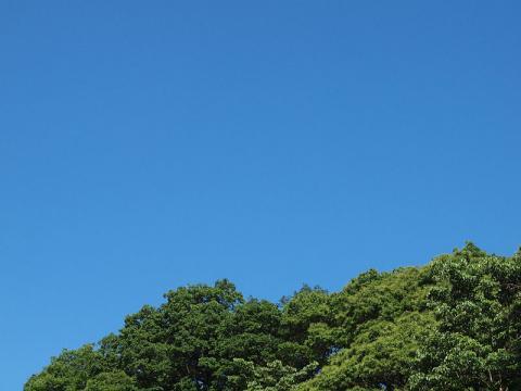 今日の青空