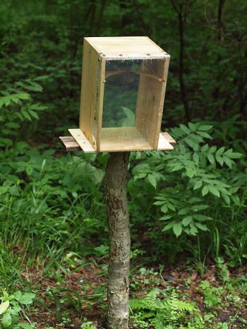 ハチ巣箱101