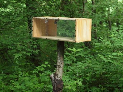 ハチ巣箱102