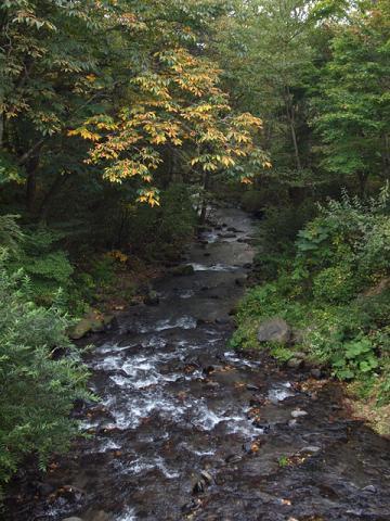湯川とトチノキ黄葉