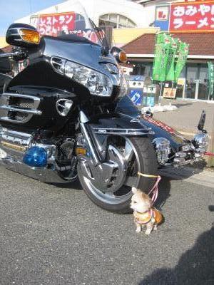 番犬_convert_20101205214528