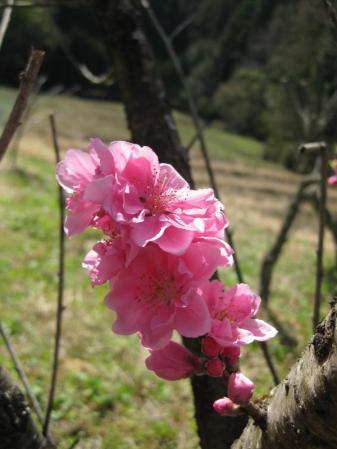 05桜の近く_convert_20110417224051