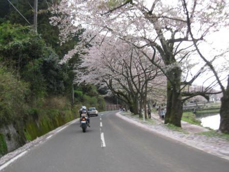 10桜通り