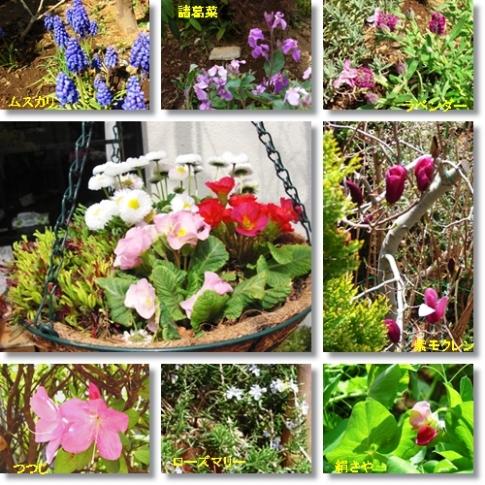 4月のお花達2