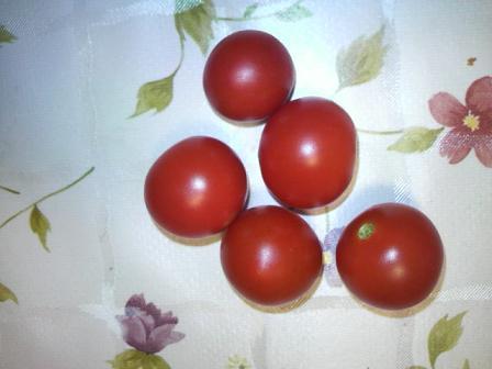 ミニトマト収穫0730
