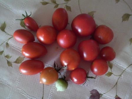 0817収穫