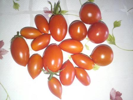 収穫0822-1