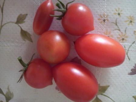 収穫0827