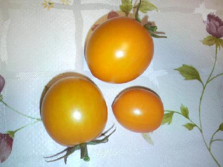 収穫0906