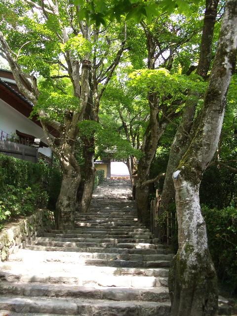 幻想的な石階段