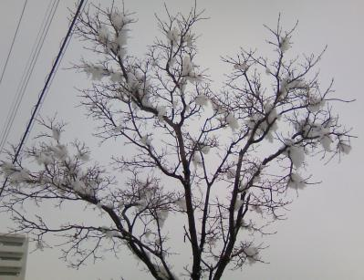 雪がかかった木々