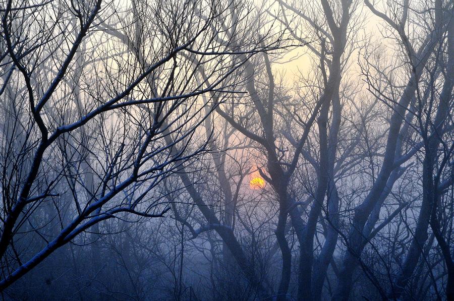 木立の向こうの朝