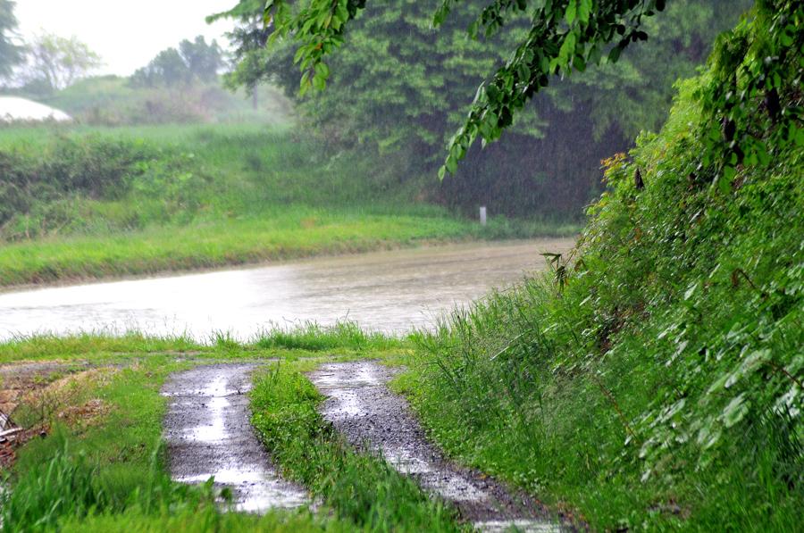 雨降りの一日