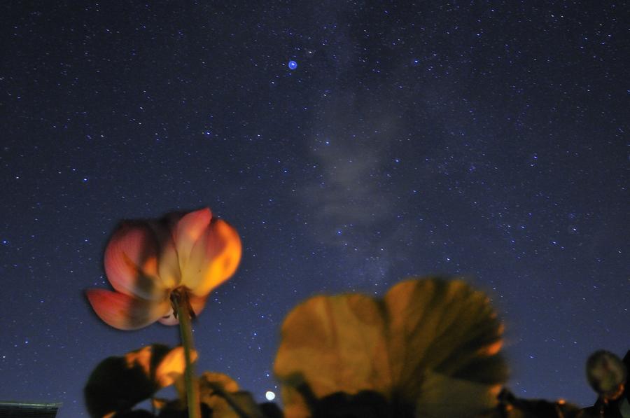 蓮の花と天の川