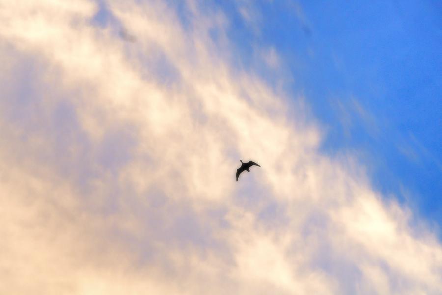 朝雲を飛ぶ