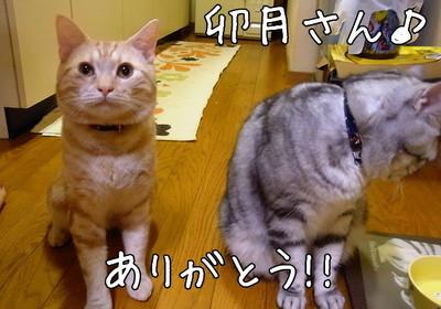 うづきさん7