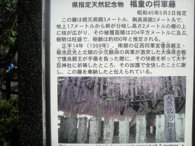 将軍藤 (2)
