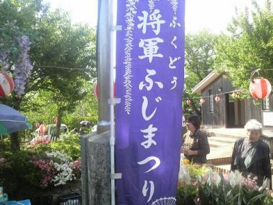 将軍藤 (3)