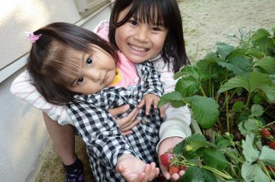 2010イチゴ家庭菜園 (2)
