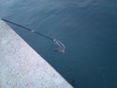 20101113イカ釣り (2)