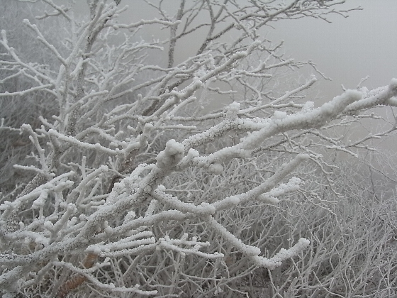 20091115-01.jpg
