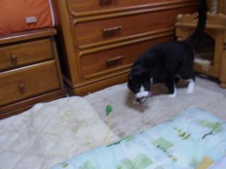 RIMG0004_20110529193946.jpg