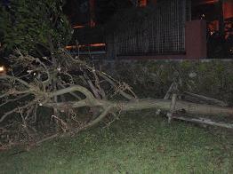 台風が去った後