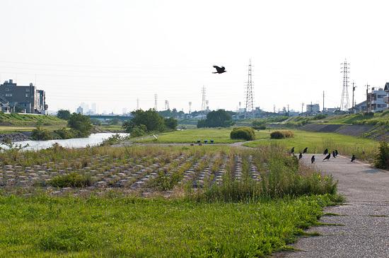 矢田川河川敷-10