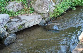 用水路で涼む