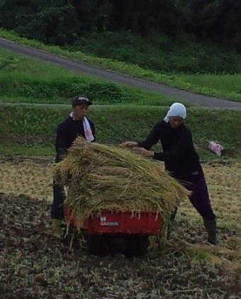 稲刈りトップカー