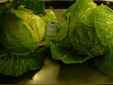 大きな野菜!