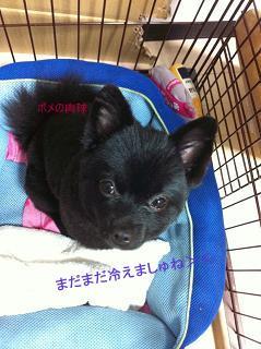 犬カットマノア②