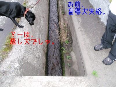 touhoku_20100811_1205N.jpg