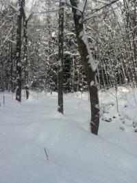 高山 新雪