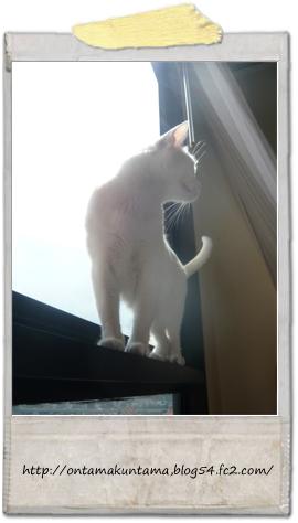cat09122101