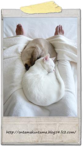 cat10021501