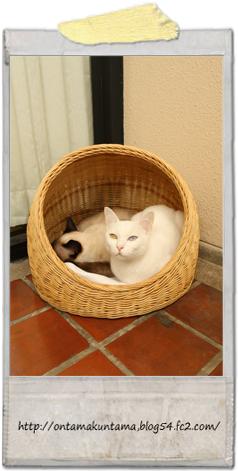 cat10022001