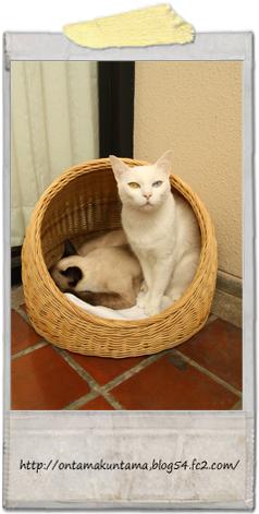 cat10022002