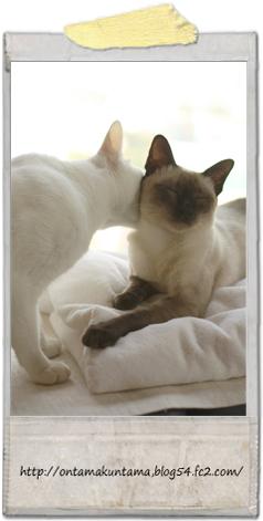 cat10022502