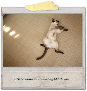 cat10030501