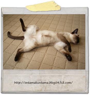 cat10030502