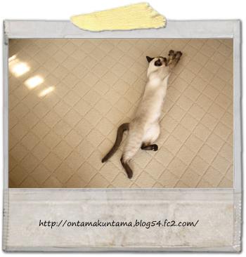 cat10030503