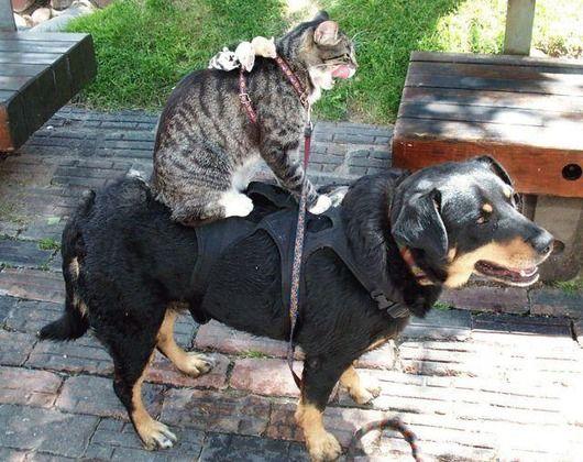ネズミ>猫>犬