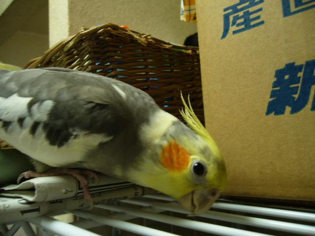 黄色いお顔♪