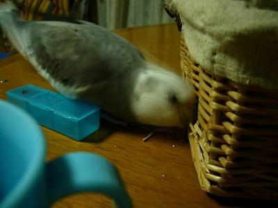 あーちゃん、カゴを食いちぎるっ!
