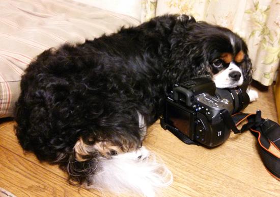 メイちゃんのカメラ枕