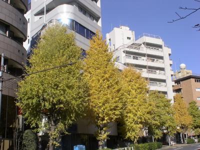 原宿の黄葉3