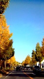 11月15日 銀杏並木